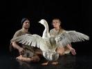 Петербургские орнитологи обнаружили новую породу птиц – Гусь Чукотский: Фоторепортаж