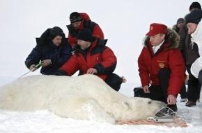 Путин встретился с полярниками и медведем