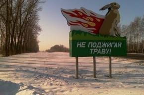 Петербургские пожарные занялись травой