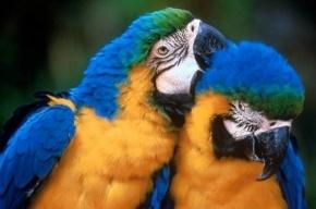 Где устраивают попугаевы попойки?