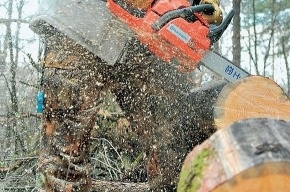 В Удельном парке спилили не меньше сотни деревьев