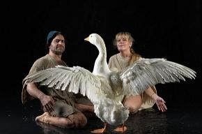 Петербургские орнитологи обнаружили новую породу птиц – Гусь Чукотский