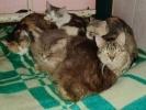 Приютите спасенную кошку!: Фоторепортаж