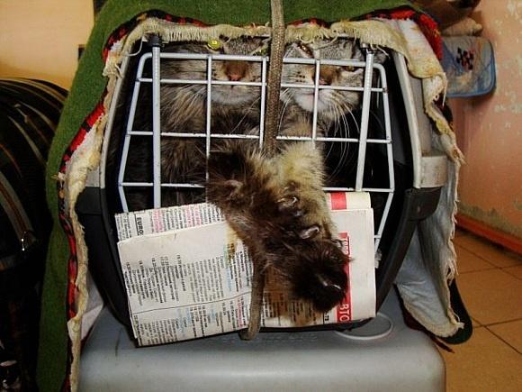 Приютите спасенную кошку!: Фото
