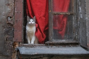 Шантажист требует миллион рублей за жизнь кота