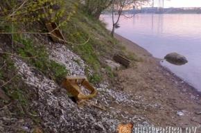 В Рыбацком нашли свалку корюшки