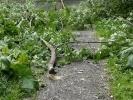 Жительница Фарфоровской улицы: «Это президент Медведев приказал под нашими окнами деревья рубить?»: Фоторепортаж