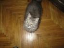 Сегодня Всемирный день петербургских котов и кошек: Фоторепортаж