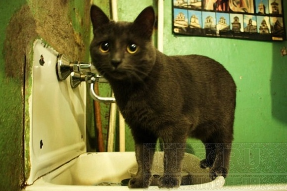 Сегодня Всемирный день петербургских котов и кошек: Фото