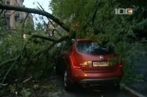 В Петербурге на Nissan Murano упало дерево