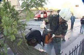 В Красносельском районе дерево упало на машину