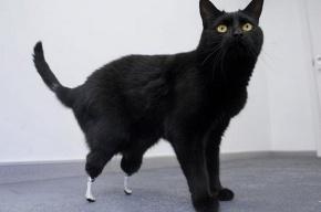 Оскар - первый в мире бионический кот