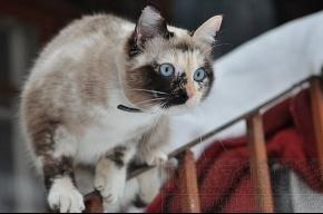 Сегодня Всемирный день петербургских котов и кошек