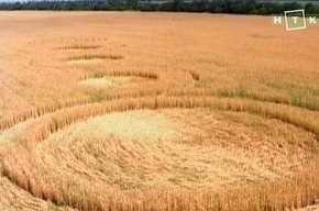 На полях Краснодарского края «пришельцы» оставили круги