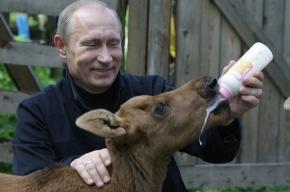 Путин попросил лосят не чавкать