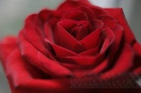 Кокаин прятали в коробках с розами и астральмериями