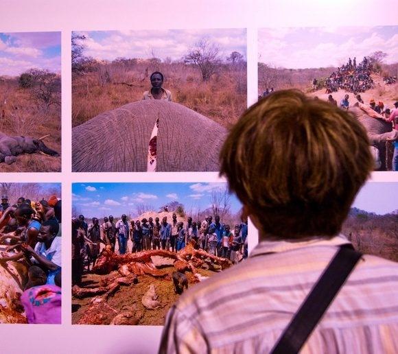 Мировая фотожурналистика в «Этажах»: Фото