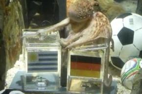 Осьминог Пауль отдал Германии третье место