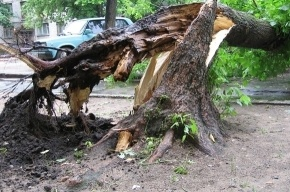 В Петербурге деревья упали на 15 автомобилей
