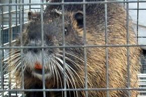Зверинец в ЦПКиО: зачем мучить животных?