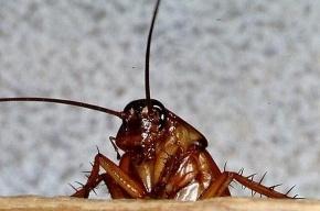 «Воинственные» тараканы не помешали суду над Самодуровым и Ерофеевым