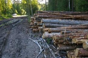 Химкинский лес вырубают без документов
