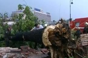 Два человека пострадали от петербургского урагана