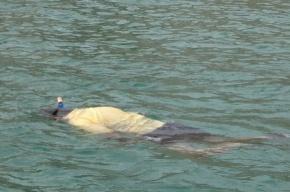 В Ленобласти тела без вести пропавших нашли в воде