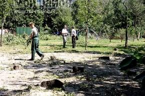 Ради строительства гаража срубили 140 деревьев