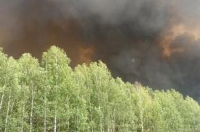 Дым пожаров уже на окраинах Петербурга