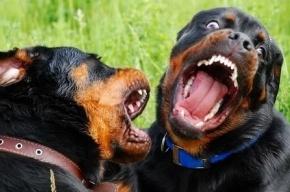 Выгулял собак – получил пулю в бедро