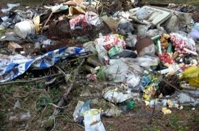 Сергей Лисовский: «Пора собирать мусор!»