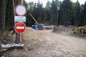 В Федерации автовладельцев назвали минусы строительства автотрассы через Химкинский лес