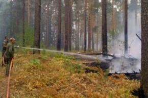 «Росатом»: Лесные пожары не угрожают Федеральному ядерному центру в Сарове