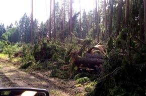 Последствия урагана в Ленобласти не удается устранить до сих пор