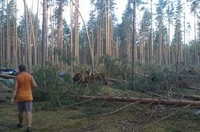 Ураганы обесточили на северо-западе России около полутора тысяч населенных пунктов