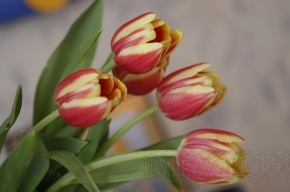 В 2011 году Международный женский день принесет всем три выходных
