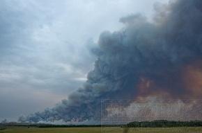В России зарегистрировано 557 очагов природных пожаров