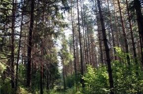 Пропавшую в лесу бабушку нашли живой