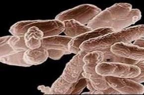 ВОЗ: миру угрожает супербактерия NDM-1