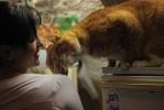 В Эрмитаже ловили кошек: Фоторепортаж