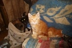 Фоторепортаж: «Приют «Ильинка» - кошачий ад»