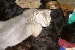 Приют «Ильинка» - кошачий ад: Фоторепортаж