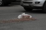 Фоторепортаж: «Кто потерял мешки с керамзитом на Марата?»