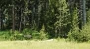 Как я встретилась с медведем: Фоторепортаж
