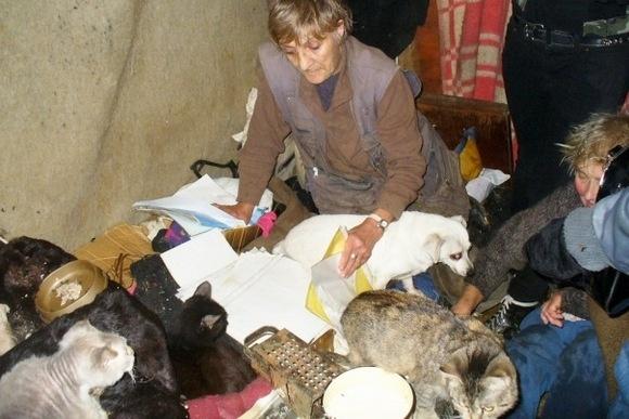 Приют «Ильинка» - кошачий ад: Фото