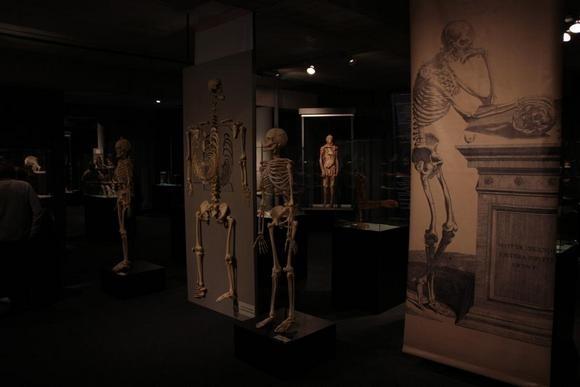 Выставка для любопытных и неслабонервных: Фото