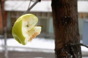 В Петербурге сегодня пройдет флэшмоб с яблоками