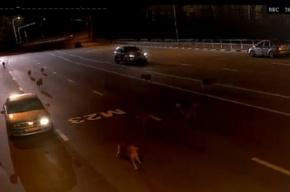 Выложено видео с нападением волков на пост ДПС