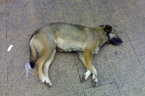 Жестокий эстонский ветеринар убил собак лопатой